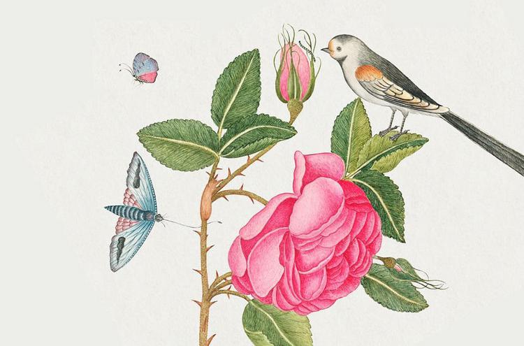 «Η Τριανταφυλλιά» από τον Γιώργο Νικηφόρου Ζερβάκη και τη Μαρία Κωσταράκη