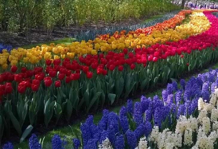 Photo από το πάρκο Keukenhof στην Ολλανδια